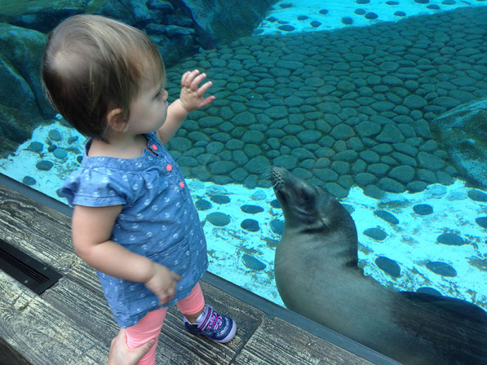 Hannah loves the sea lions at the zoo (September)